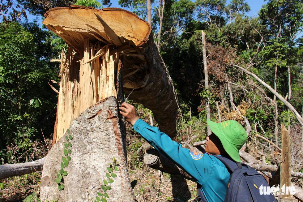 Tàn sát rừng phòng hộ đầu nguồn Ko Róa - Ảnh 6.