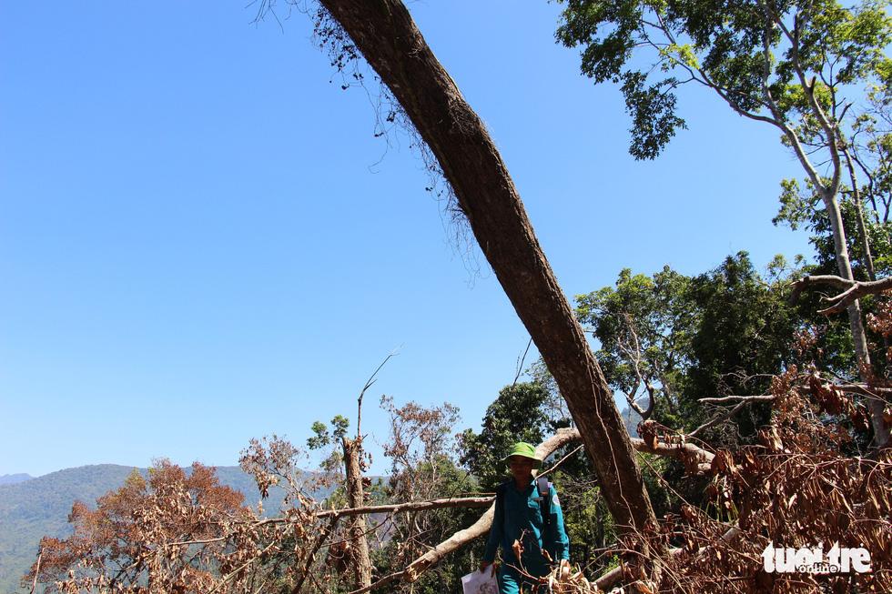 Tàn sát rừng phòng hộ đầu nguồn Ko Róa - Ảnh 13.