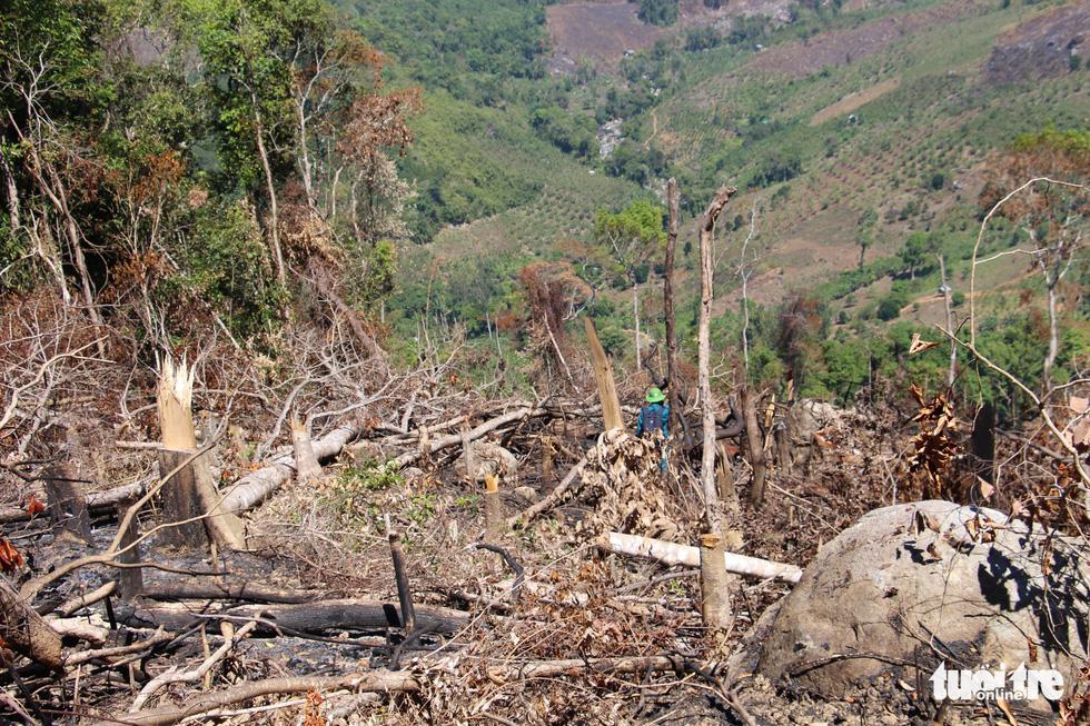 Tàn sát rừng phòng hộ đầu nguồn Ko Róa - Ảnh 14.