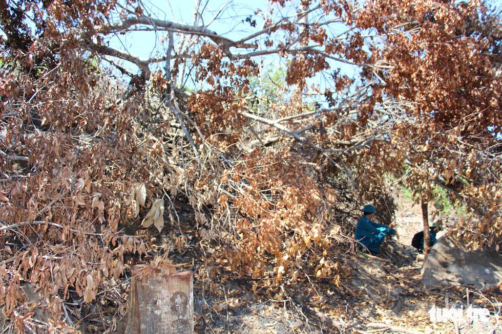 Tàn sát rừng phòng hộ đầu nguồn Ko Róa - Ảnh 17.