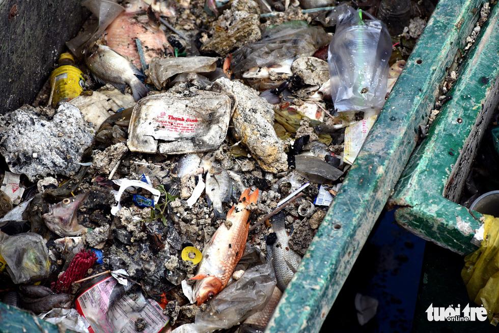 Cá lại chết nổi trên kênh Nhiêu Lộc - Thị Nghè - Ảnh 2.