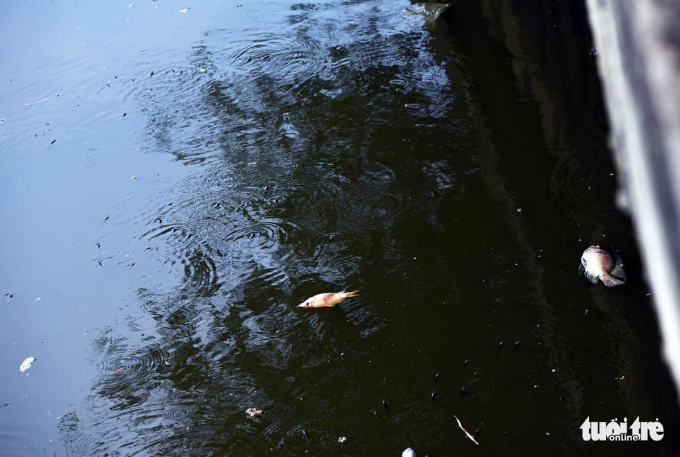 Cá lại chết nổi trên kênh Nhiêu Lộc - Thị Nghè - Ảnh 4.