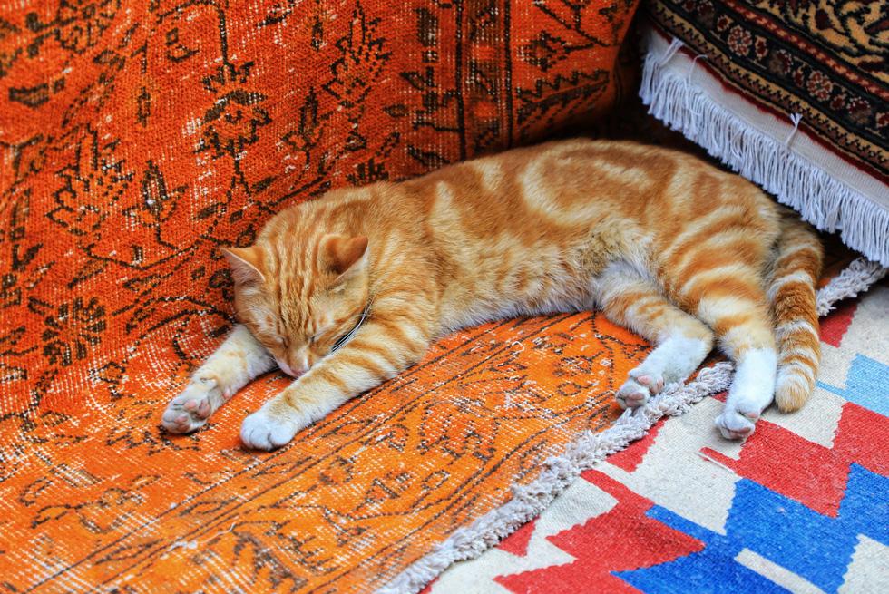 Đặc sản Thổ Nhĩ Kỳ khiến du khách mê mệt - Ảnh 5.