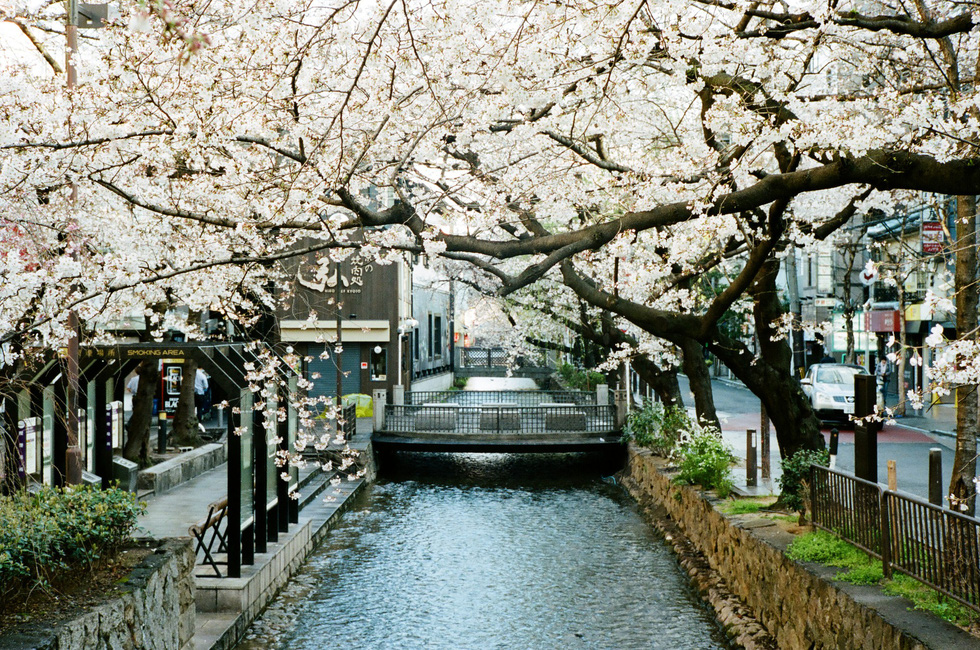 Nhật Bản cổ kính và rực rỡ qua ảnh phim  - Ảnh 7.