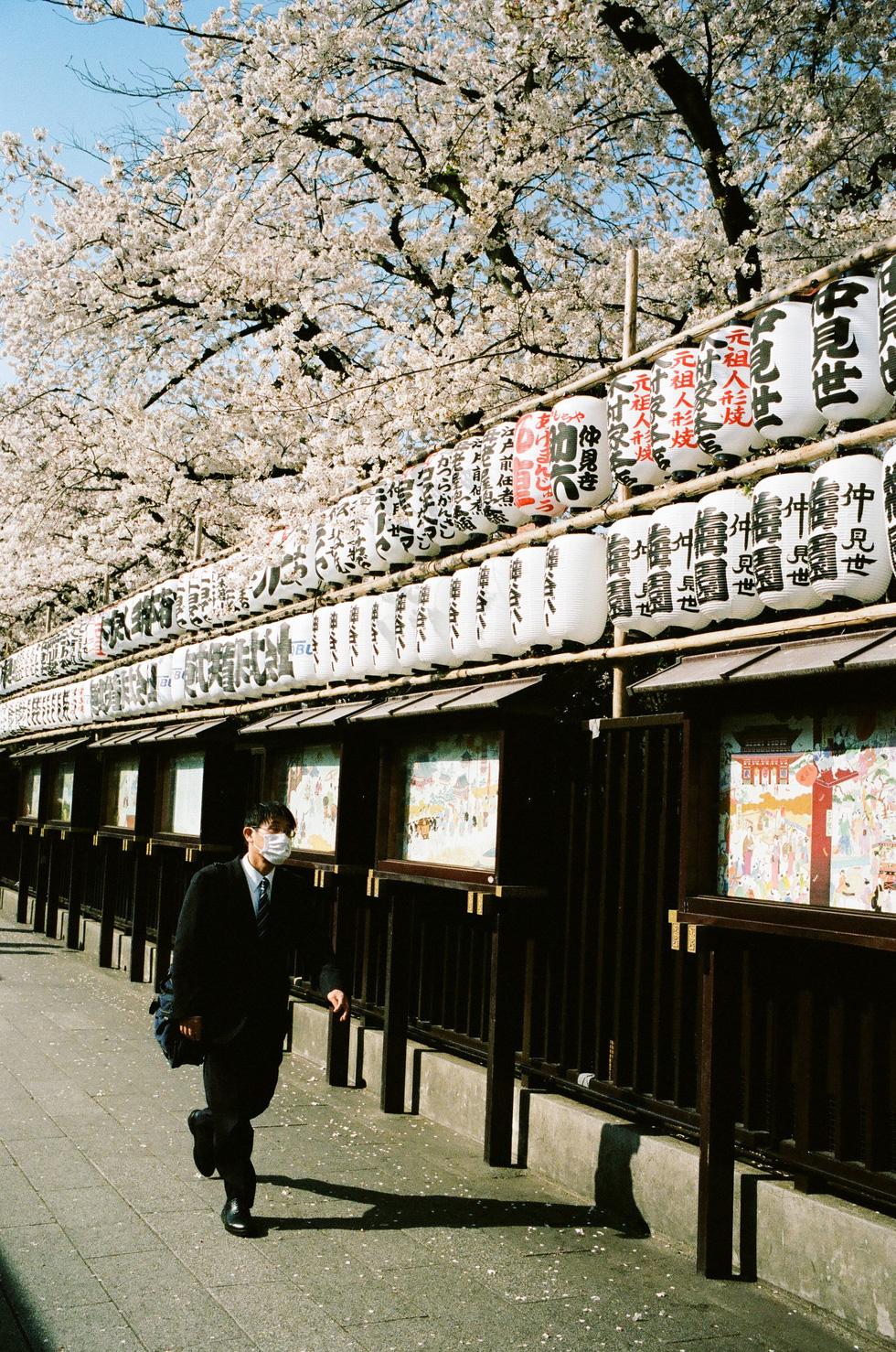 Nhật Bản cổ kính và rực rỡ qua ảnh phim  - Ảnh 4.