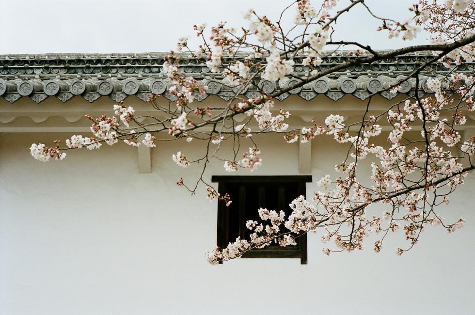 Nhật Bản cổ kính và rực rỡ qua ảnh phim  - Ảnh 17.