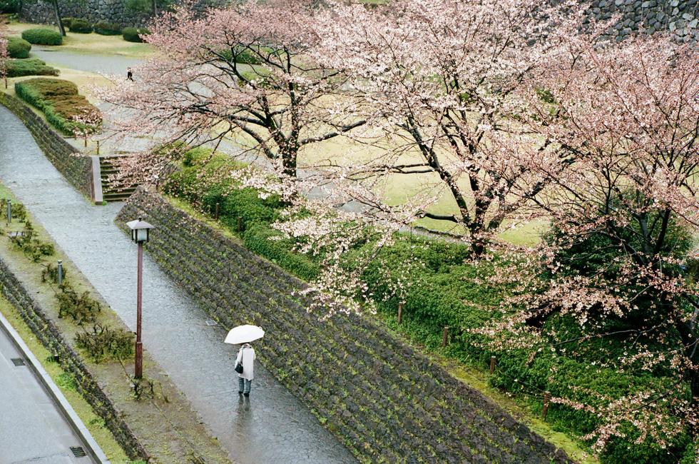Nhật Bản cổ kính và rực rỡ qua ảnh phim  - Ảnh 12.