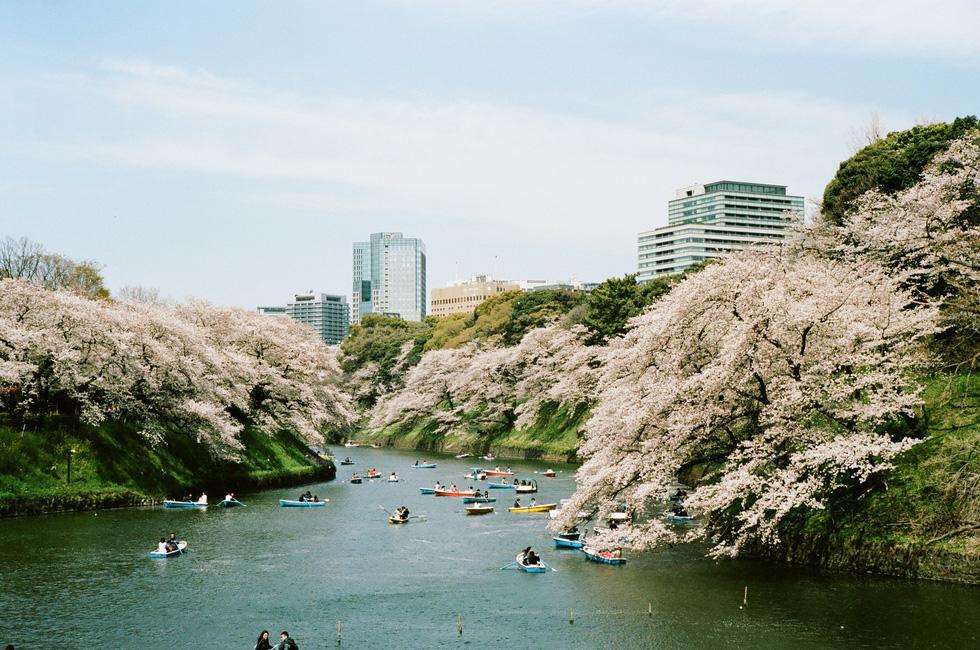 Nhật Bản cổ kính và rực rỡ qua ảnh phim  - Ảnh 1.