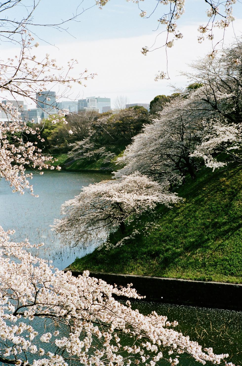 Nhật Bản cổ kính và rực rỡ qua ảnh phim  - Ảnh 3.