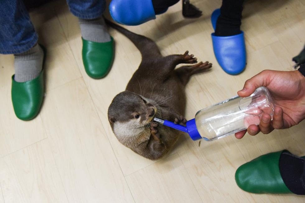 Sửng sốt với trào lưu nuôi rái cá làm... thú cưng - Ảnh 4.