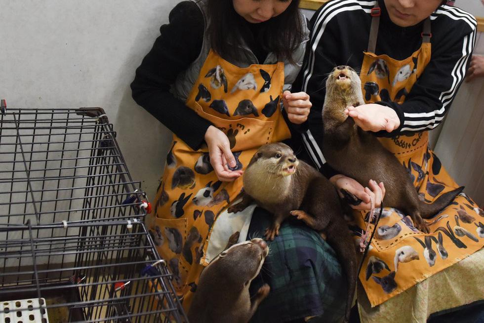 Sửng sốt với trào lưu nuôi rái cá làm... thú cưng - Ảnh 2.