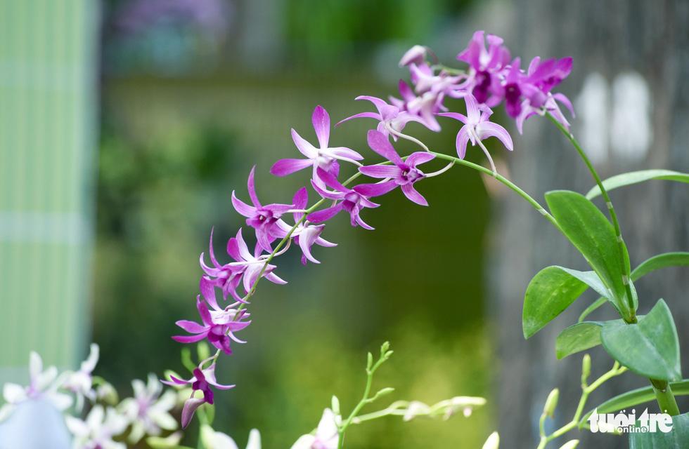 Check-in công viên Tao Đàn ngắm hoa lan trong Sắc màu nhiệt đới - Ảnh 4.