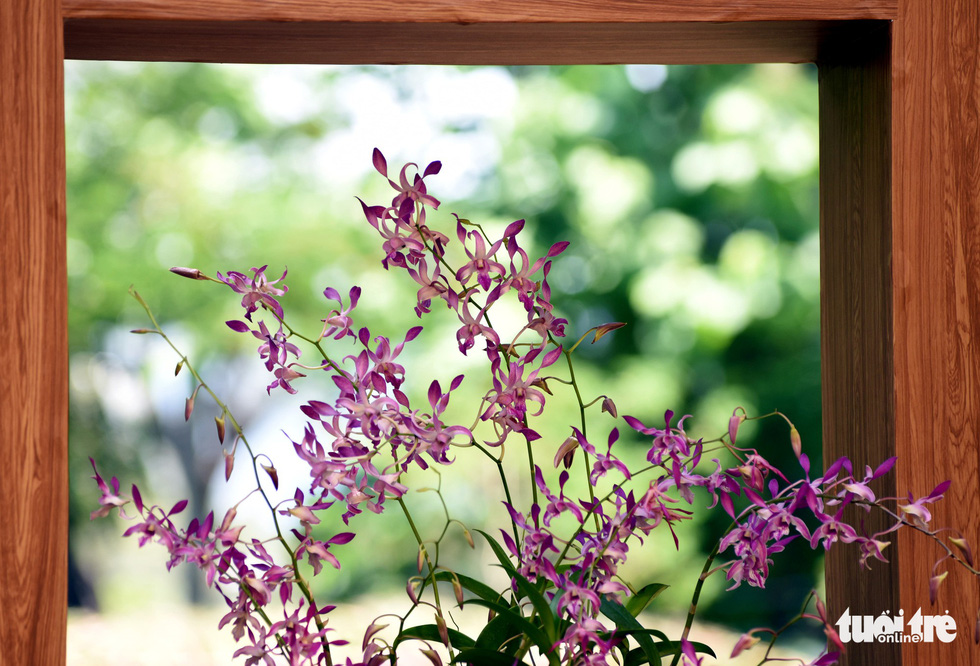 Check-in công viên Tao Đàn ngắm hoa lan trong Sắc màu nhiệt đới - Ảnh 6.