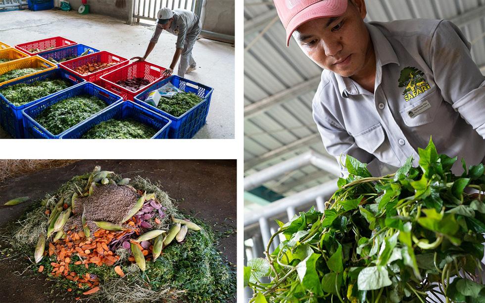 Thú vị tê giác sinh con tại Việt Nam - Ảnh 6.