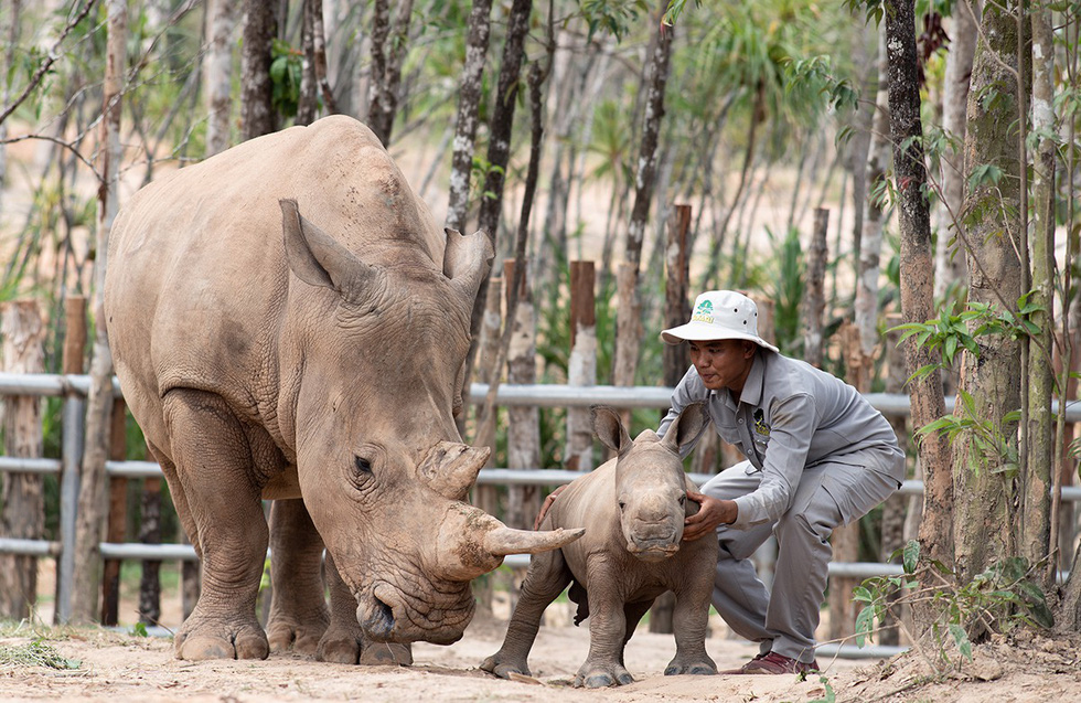 Thú vị tê giác sinh con tại Việt Nam - Ảnh 2.