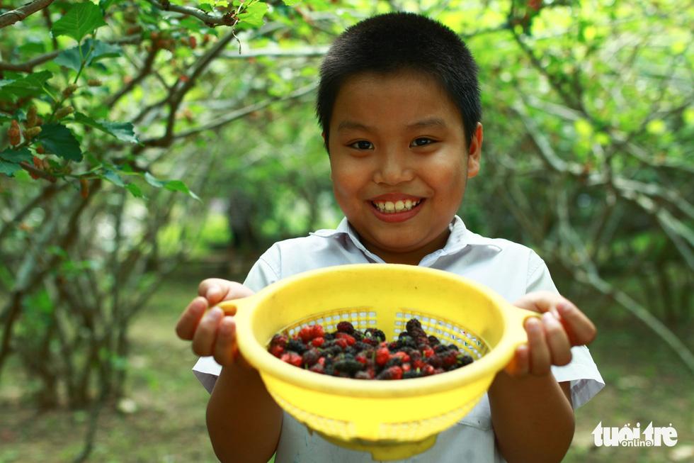 Lạc vào vườn dâu tằm mọng quả ở Hội An - Ảnh 7.