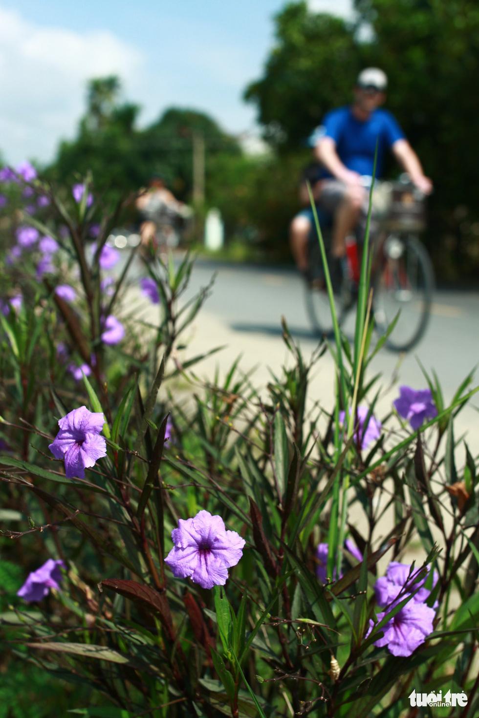 Con đường chiều tím được khách Tây săn đón ở ngoại ô phố Hội - Ảnh 5.
