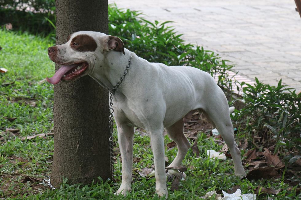 Chó không đeo rọ mõm lang thang khắp phố phường Hà Nội - Ảnh 5.