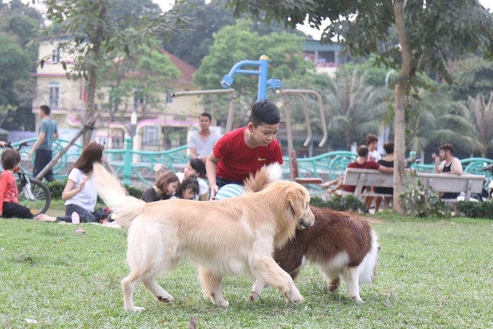 Chó không đeo rọ mõm lang thang khắp phố phường Hà Nội - Ảnh 3.