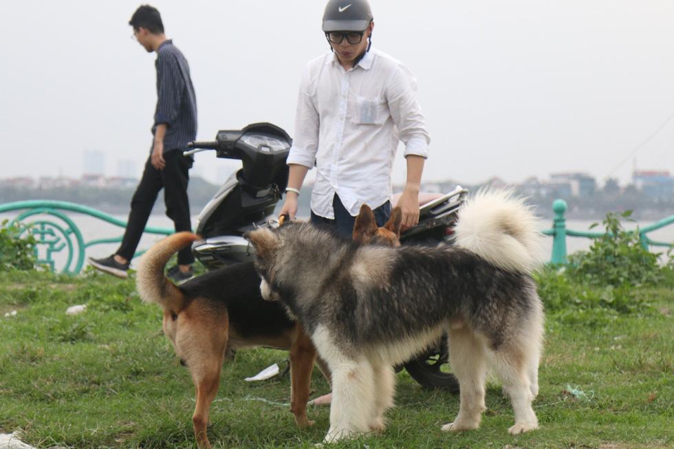 Chó không đeo rọ mõm lang thang khắp phố phường Hà Nội - Ảnh 7.