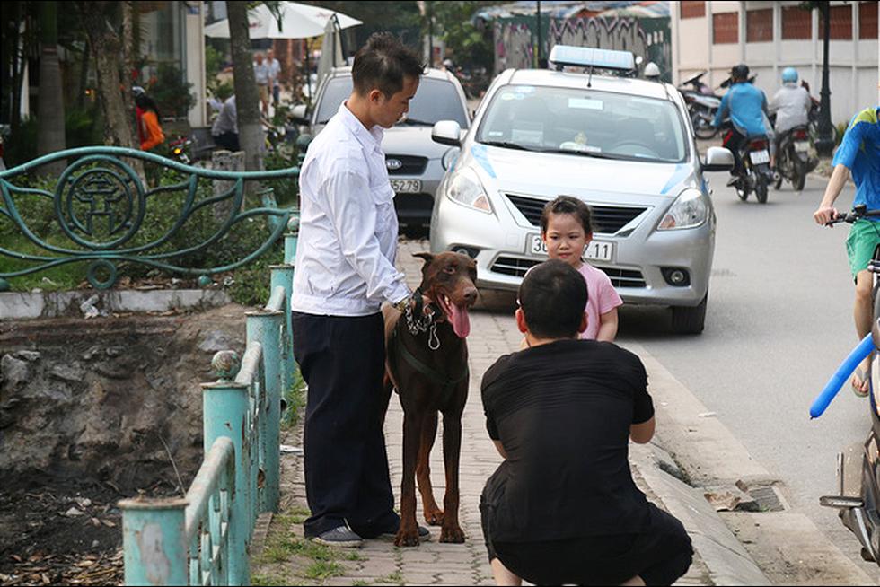 Chó không đeo rọ mõm lang thang khắp phố phường Hà Nội - Ảnh 1.