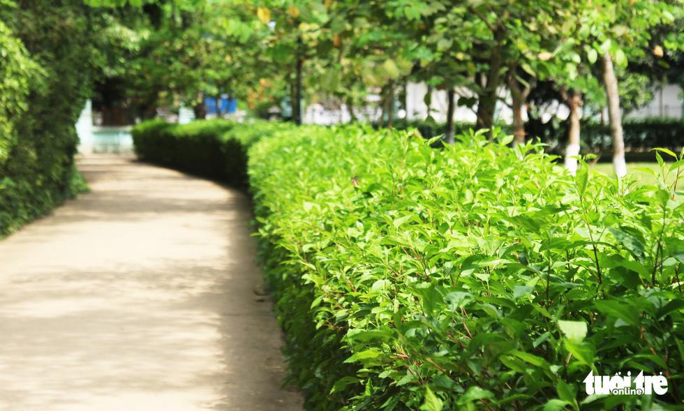 Về làng Sen, Hoàng Trù rợp bóng cây xanh - Ảnh 21.