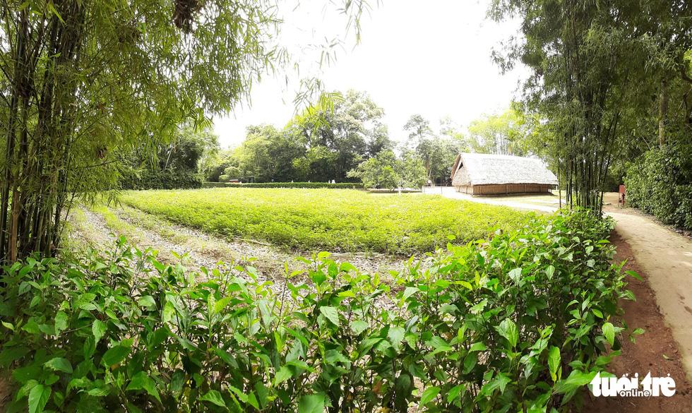 Về làng Sen, Hoàng Trù rợp bóng cây xanh - Ảnh 6.