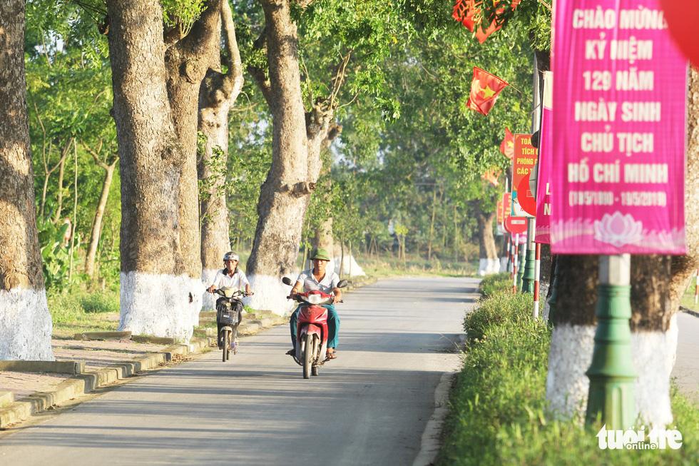 Hàng cây xà cừ hơn nửa thế kỷ trên quê hương Bác Hồ - Ảnh 3.
