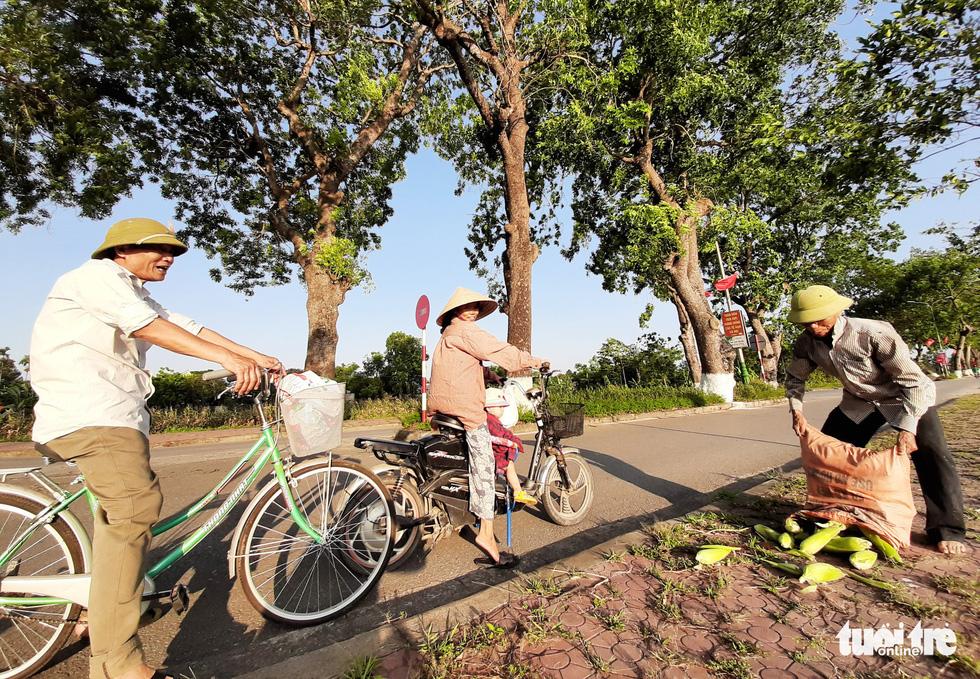 Hàng cây xà cừ hơn nửa thế kỷ trên quê hương Bác Hồ - Ảnh 12.