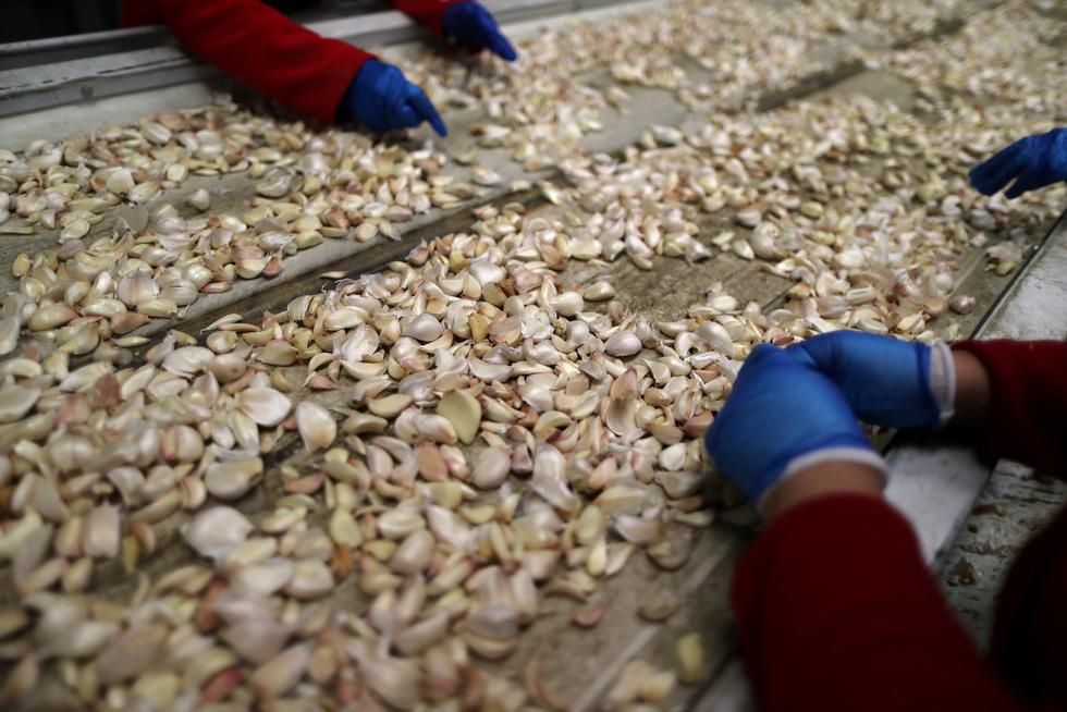 Dân trồng tỏi ở Mỹ thở phào mong thương chiến - Ảnh 6.