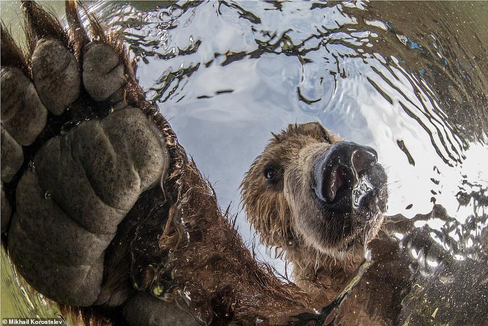 Ảnh thiên nhiên tuyệt đẹp từ Natural World Photography - Ảnh 5.