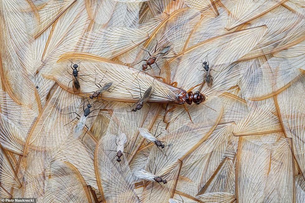 Ảnh thiên nhiên tuyệt đẹp từ Natural World Photography - Ảnh 8.