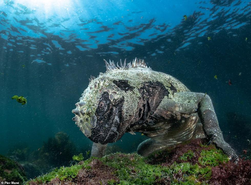 Ảnh thiên nhiên tuyệt đẹp từ Natural World Photography - Ảnh 10.