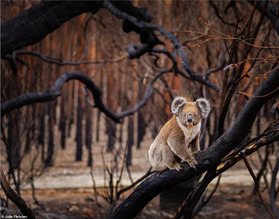 Ảnh thiên nhiên tuyệt đẹp từ Natural World Photography - Ảnh 7.