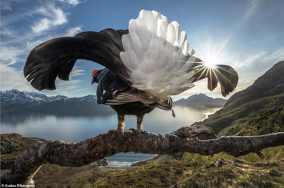 Ảnh thiên nhiên tuyệt đẹp từ Natural World Photography - Ảnh 2.
