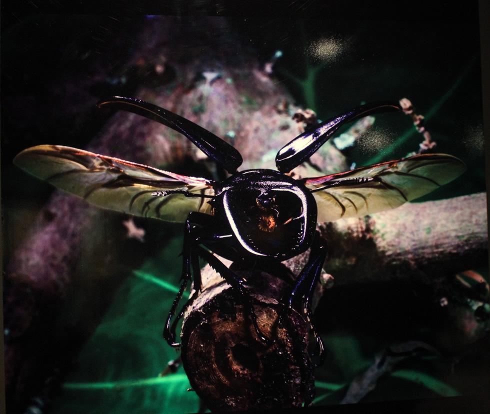Thế giới côn trùng Việt Nam đẹp lộng lẫy qua mắt nhiếp ảnh gia Ý - Ảnh 11.