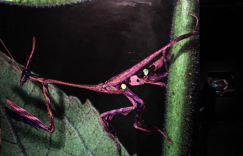 Thế giới côn trùng Việt Nam đẹp lộng lẫy qua mắt nhiếp ảnh gia Ý - Ảnh 14.