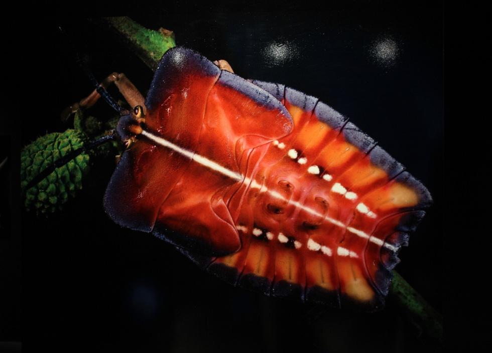Thế giới côn trùng Việt Nam đẹp lộng lẫy qua mắt nhiếp ảnh gia Ý - Ảnh 15.