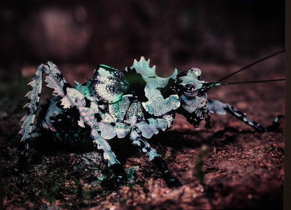 Thế giới côn trùng Việt Nam đẹp lộng lẫy qua mắt nhiếp ảnh gia Ý - Ảnh 18.