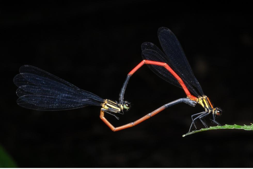 Thế giới côn trùng Việt Nam đẹp lộng lẫy qua mắt nhiếp ảnh gia Ý - Ảnh 6.