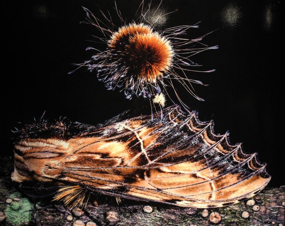 Thế giới côn trùng Việt Nam đẹp lộng lẫy qua mắt nhiếp ảnh gia Ý - Ảnh 19.