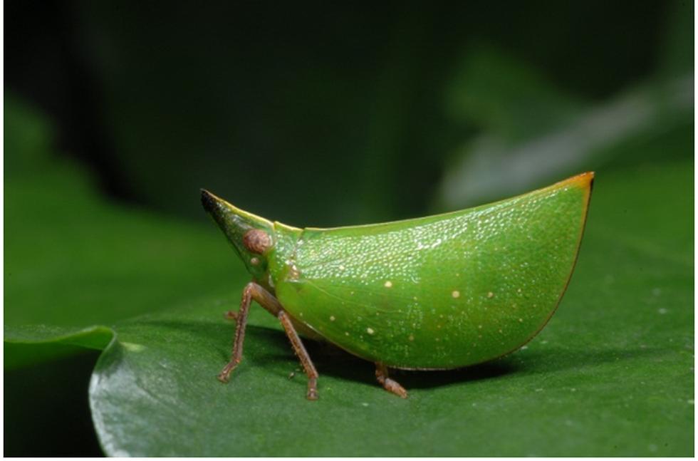 Thế giới côn trùng Việt Nam đẹp lộng lẫy qua mắt nhiếp ảnh gia Ý - Ảnh 7.