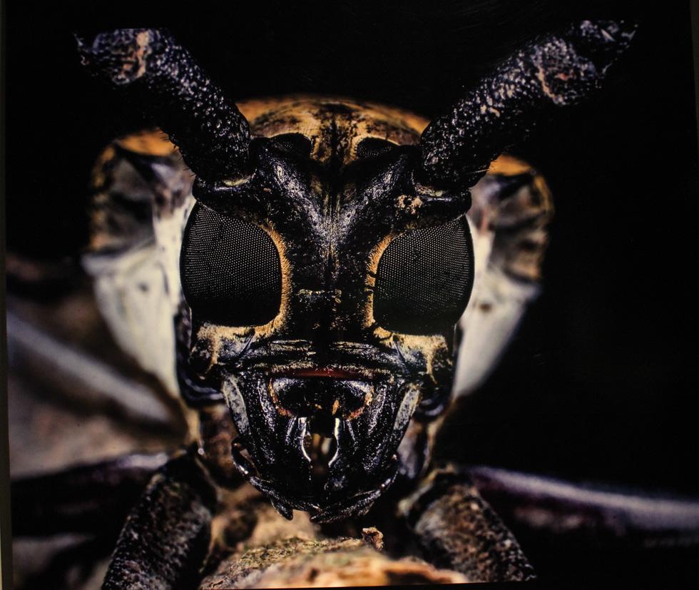 Thế giới côn trùng Việt Nam đẹp lộng lẫy qua mắt nhiếp ảnh gia Ý - Ảnh 20.