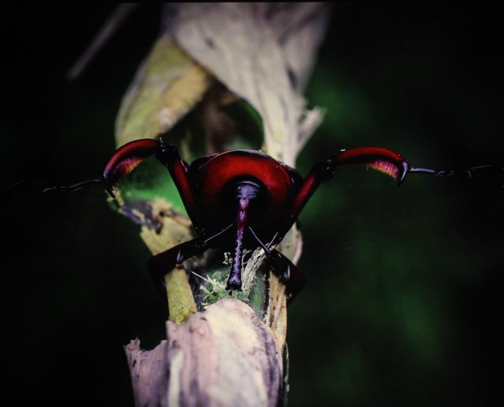 Thế giới côn trùng Việt Nam đẹp lộng lẫy qua mắt nhiếp ảnh gia Ý - Ảnh 21.