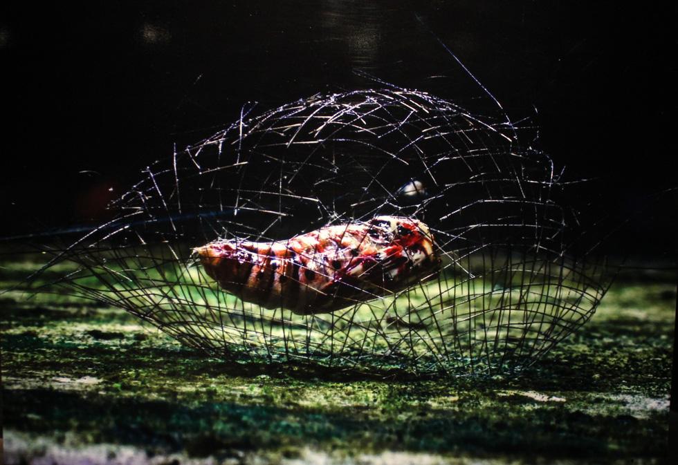 Thế giới côn trùng Việt Nam đẹp lộng lẫy qua mắt nhiếp ảnh gia Ý - Ảnh 22.