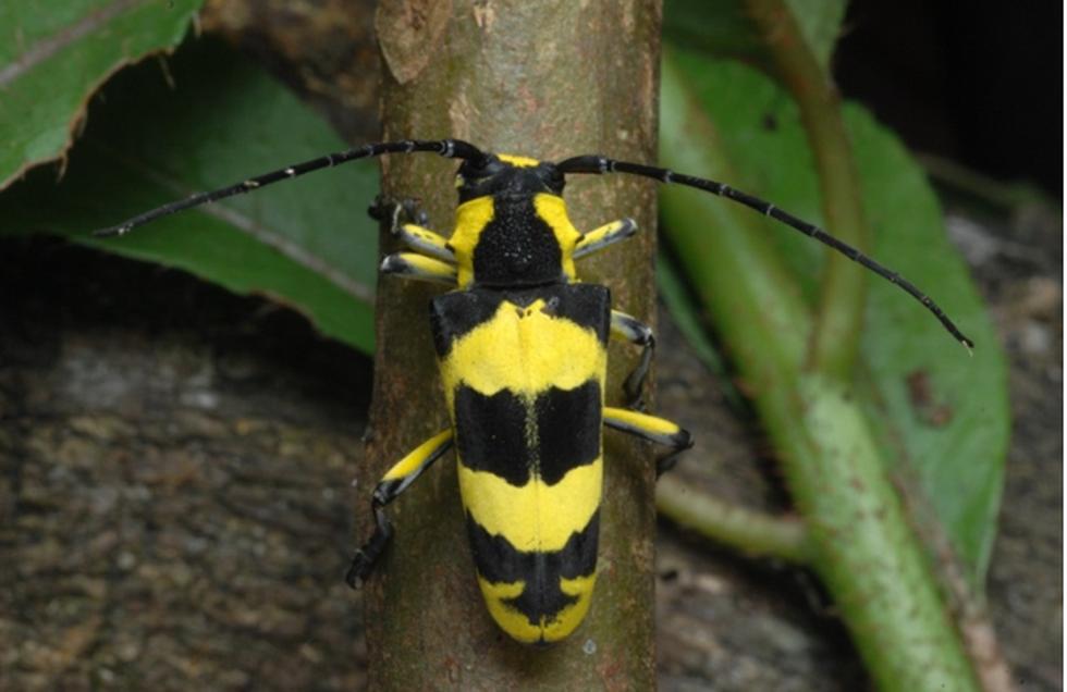 Thế giới côn trùng Việt Nam đẹp lộng lẫy qua mắt nhiếp ảnh gia Ý - Ảnh 8.