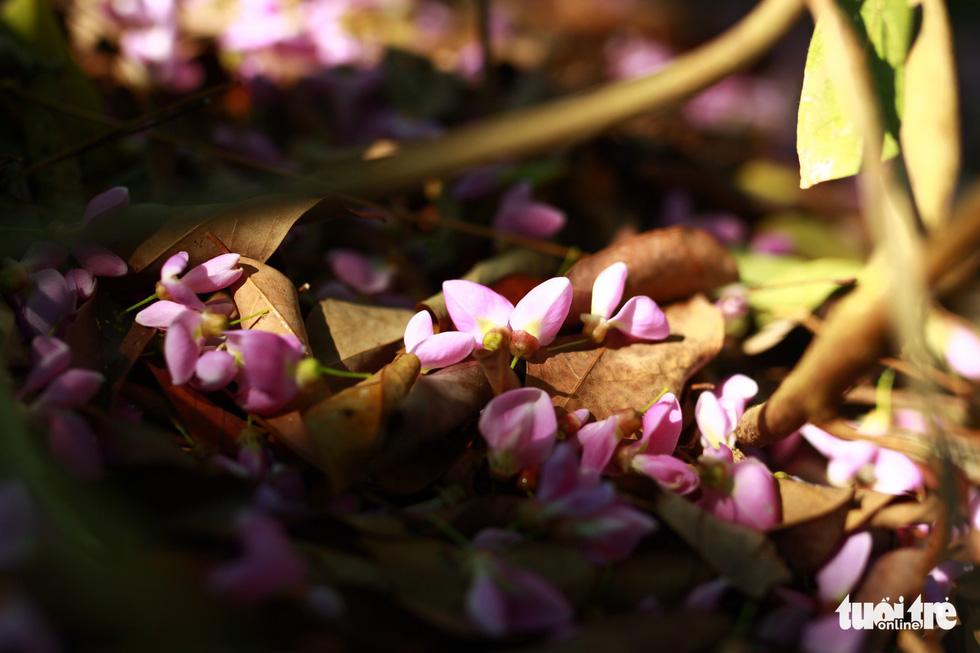 Hoa thàn mát nhuộm tím bán đảo Sơn Trà - Ảnh 6.
