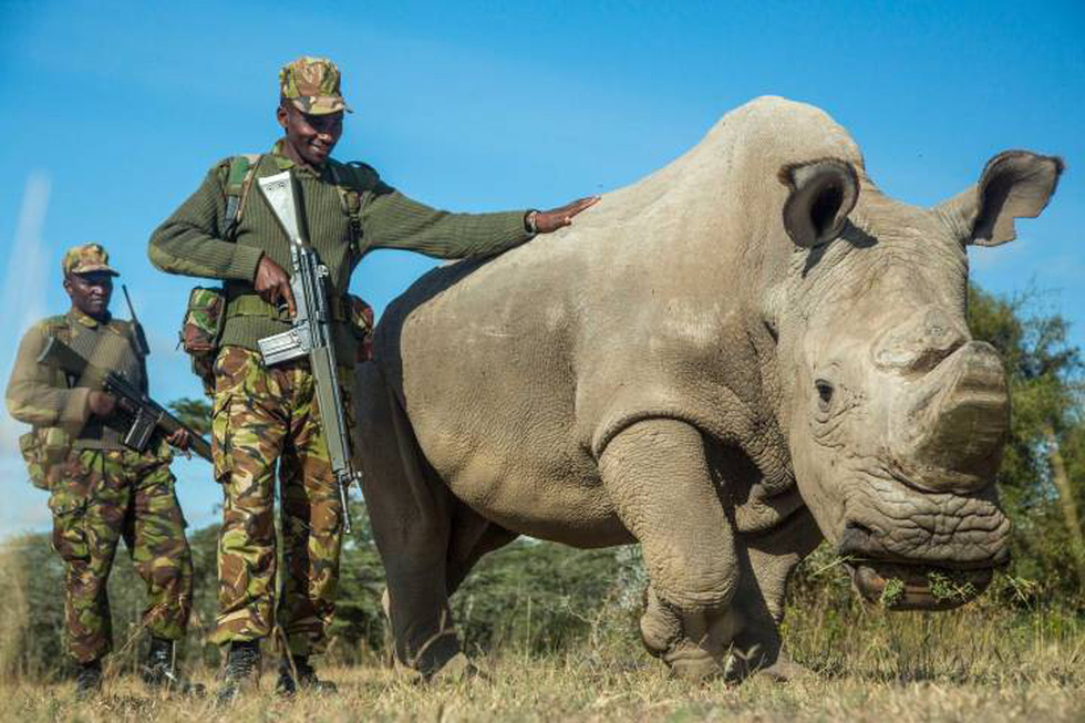 Những con vật khiến cả thế giới nhớ đến - Ảnh 12.