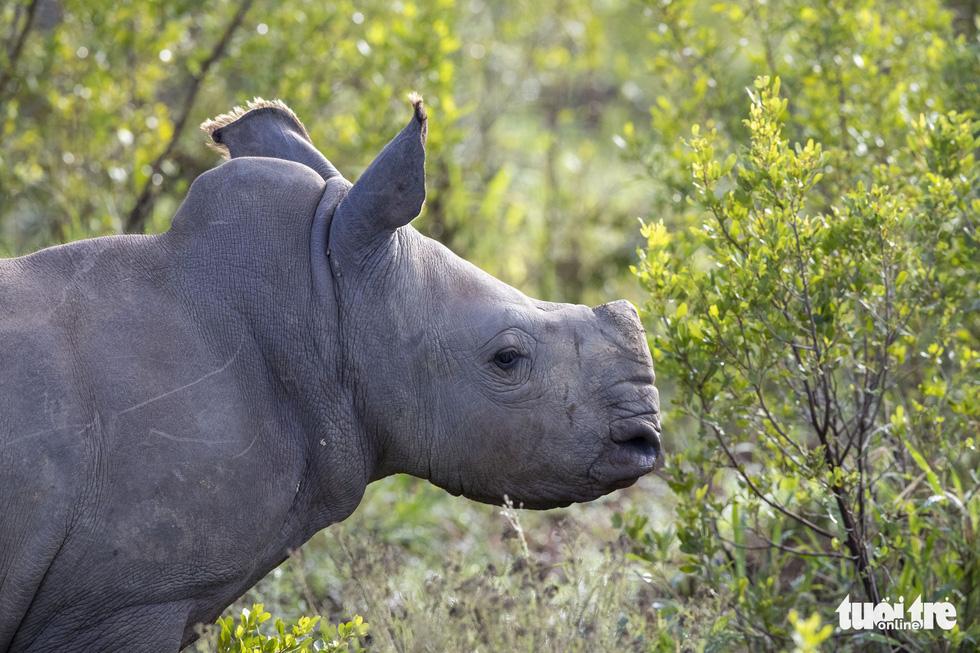 Thót tim ngắm sư tử từ xe mui trần ở Nam Phi - Ảnh 9.