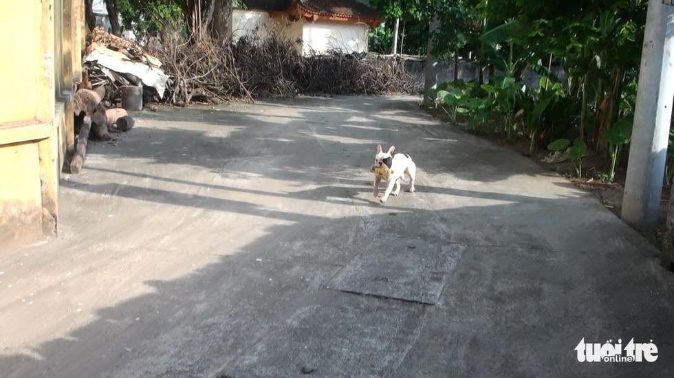 Vựa ve chai của chú chó đáng yêu tại Hà Nội - Ảnh 4.